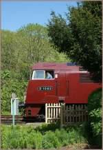 stimmungsbilder-und-sonstiges/141078/wer-spickelt-den-da-so-scheu Wer spickelt den da so scheu hinter den Büschen hervor? (Corfe Castle, den 8. Mai 2011)