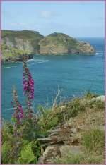 cornwall/142968/ruhe-entspannung-und-farben-vom-feinsten Ruhe, Entspannung und Farben vom feinsten geniest man auf den Küstenwanderungen in Cornwall.