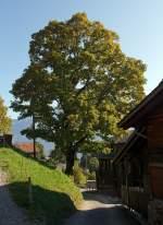 Berner Oberland/173310/am-01102011-auf-der-planalp-oberhalb Am 01.10.2011 auf der Planalp (oberhalb vom Brienzersee).