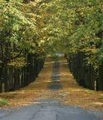 Herbst/2257/weg-in-den-herbstoktober-2008 Weg in den Herbst (Oktober 2008)