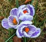 Blumen/118703/bald-wird-es-fruehling20032010 Bald wird es Frühling... (20.03.2010)