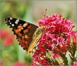 Tiere in der Natur/144336/gleich-geht-es-weiter-aber-nun Gleich geht es weiter, aber nun lasse ich mich erstmal fotografieren... (28.05.2011)