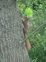 Tiere in der Natur/26624/soll-ich-jetzt-hoch-laufen-oder Soll ich jetzt hoch laufen oder doch besser rumter ???