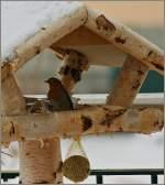 Vogel/169515/im-schneereichen-januar-2010-freute-sich Im schneereichen Januar 2010 freute sich dieses Rotkehlchen über das Futter. (13.01.2010)
