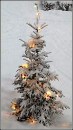 Wald und Baume/173174/frohe-weihnachten-und-einen-guten-rutsch Frohe Weihnachten und einen guten Rutsch ins neue Jahr an alle User und Besucher dieses schönen Seite. Da unser Weihnachtsbaum in diesem Jahr nicht sehr fotogen ist, hat ein Bild aus dem letzeten Jahr herhalten müssen. Hans und Jeanny
