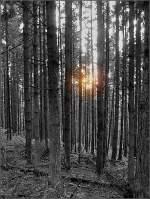 Wald und Baume/8534/herbstwald-im-abendlicht-des-080908-jeanny Herbstwald im Abendlicht des 08.09.08. (Jeanny)